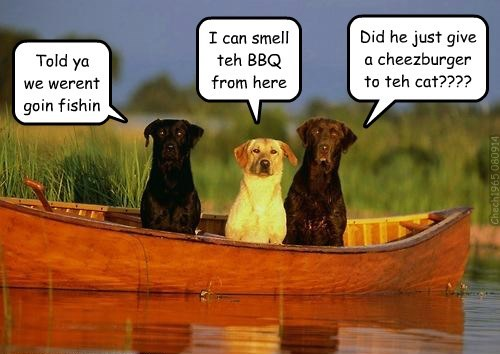 dogs,I Can Has Cheezburger,Cats