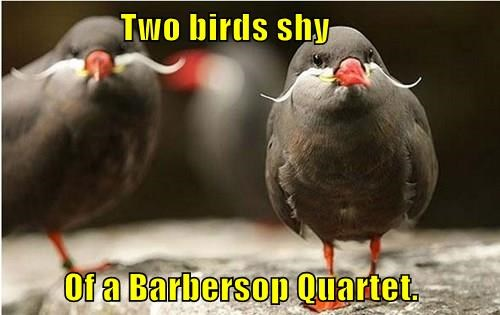 Two birds shy          Of a Barbersop Quartet.
