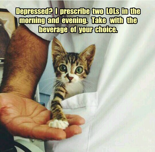 Dr. Tiny Cat Consultation