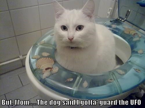 But, Mom.....The dog said I gotta' guard the UFO