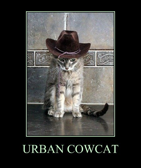 URBAN COWCAT