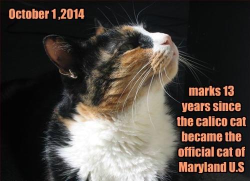 Happy Anniversary Maryland!