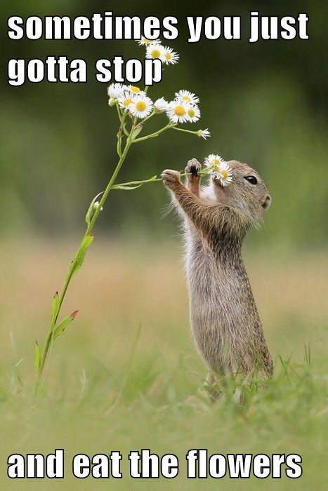 sometimes you just gotta stop  and eat the flowers