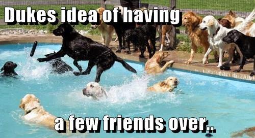 Dukes idea of having     a few friends over..