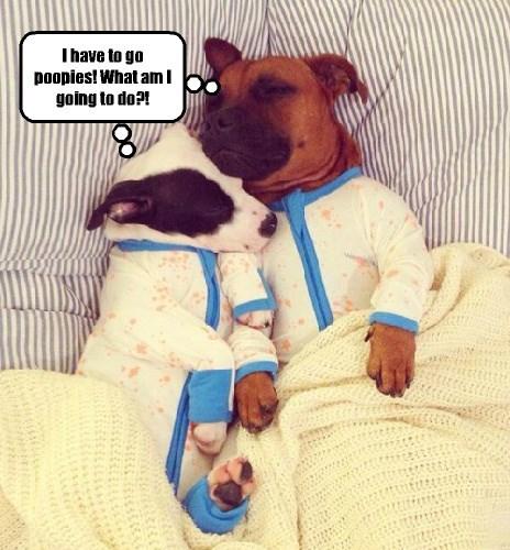 dogs,pajamas,poop
