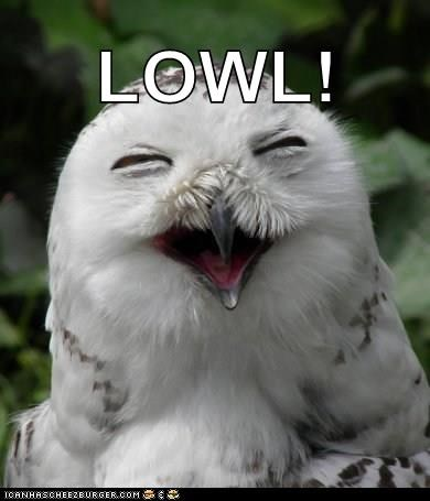 What Do You Call A Happy Owl?