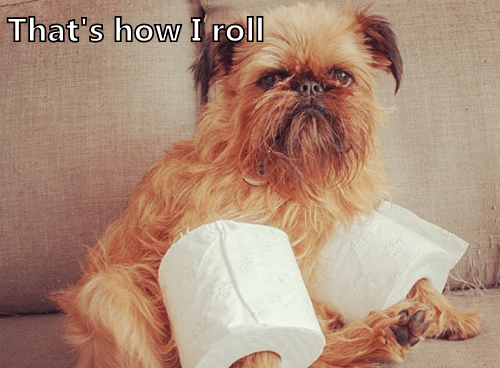 dogs,rolling,toilet paper