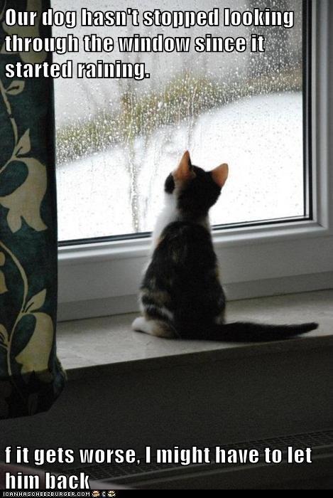 Cats,dogs,rain