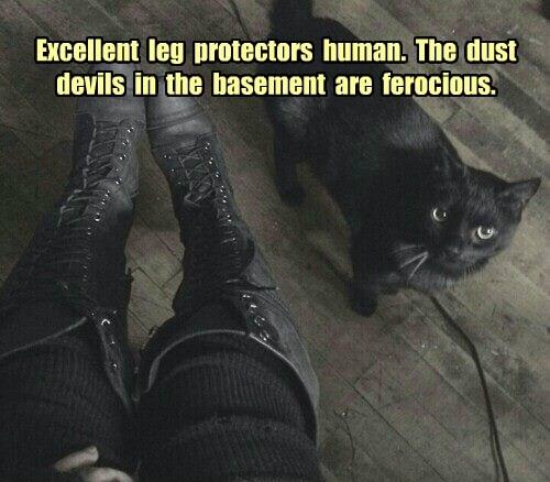 Excellent  leg  protectors  human.  The  dust  devils  in  the  basement  are  ferocious.