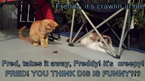 Freddy, it's crawlin at me  Fred, takes it away, Freddy! It's  creepy! FRED! YOU THINK DIS IS FUNNY?!?