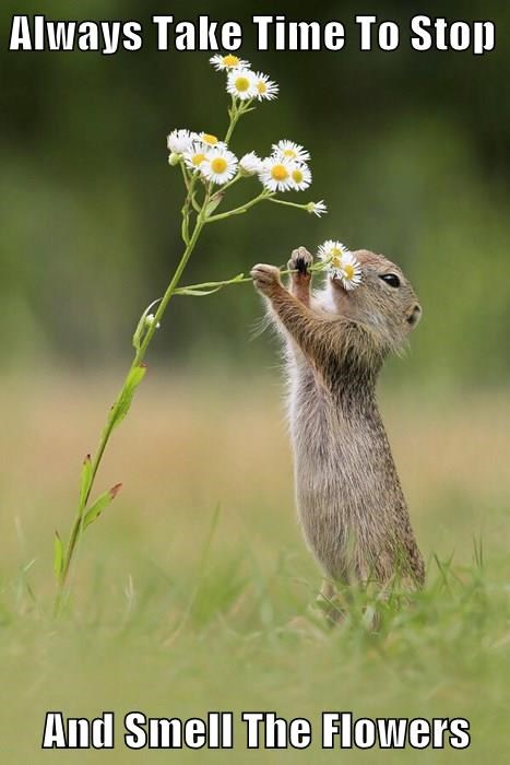 Always Take Time To Stop   And Smell The Flowers