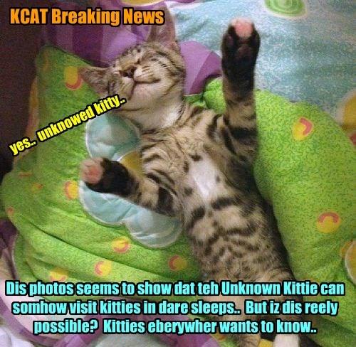 KCAT Breaking News - This Unknown Kittie mystery deepens..  Scientists must inbestigate!