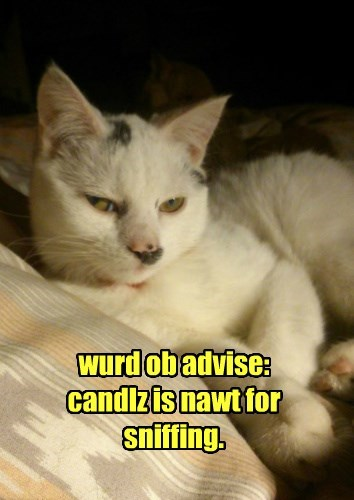 wurd ob advise: candlz is nawt for sniffing.
