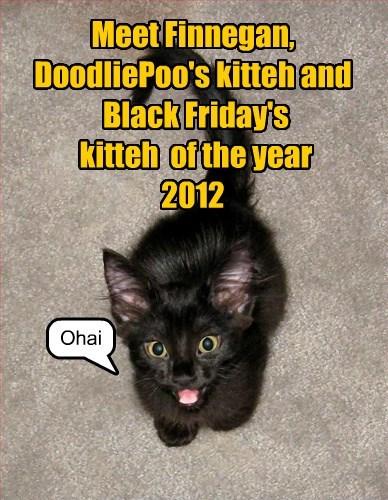Meet Finnegan,  DoodliePoo's kitteh and  Black Friday's  kitteh  of the year 2012