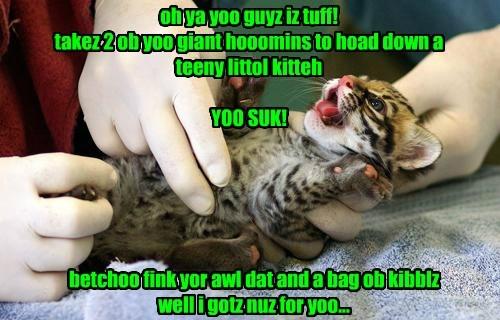 Kitten Tawnts...Owch!