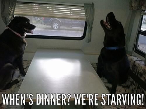 I hope it's cheezburgers!