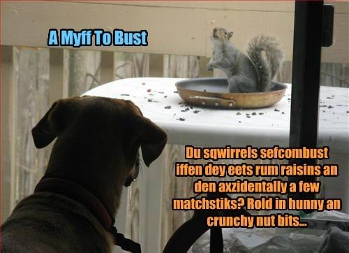 Du sqwirrels sefcombust iffen dey eets rum raisins an den axzidentally a few matchstiks? Rold in hunny an crunchy nut bits...