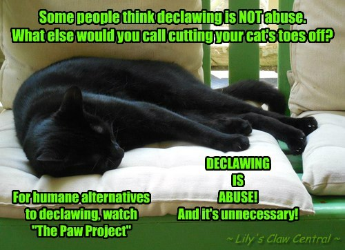 Declawing IS Abuse!