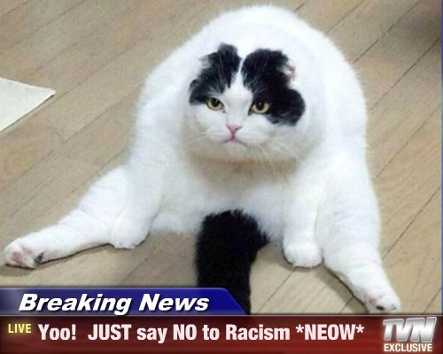 Breaking News - Yoo!  JUST say NO to Racism *NEOW*
