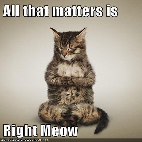 buddha,zen,Cats