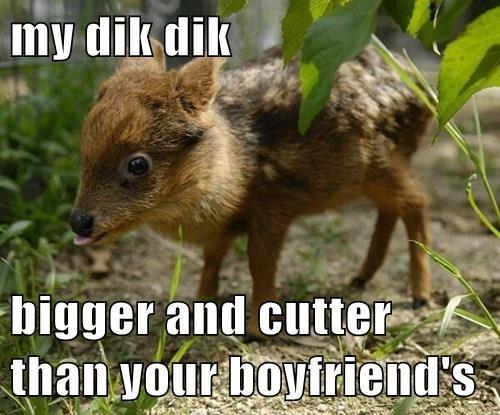 my dik dik  bigger and cutter than your boyfriend's