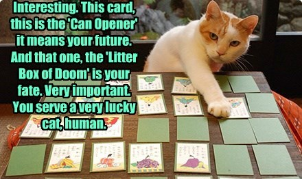 Interesting. This card, this is the 'Can Opener' it means your future.  And that one, the 'Litter Box of Doom' is your fate. Very important.  You serve a very lucky cat, human.