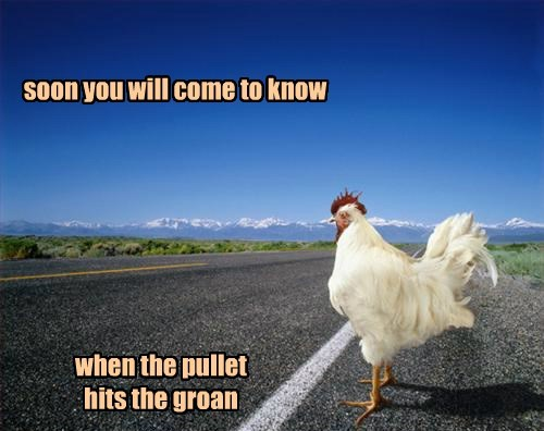 Like the Answer to the Chicken/Road Queery