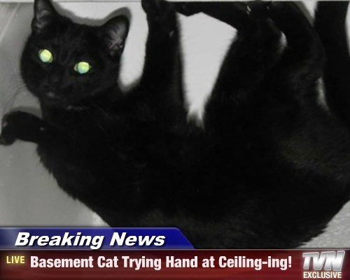 Breaking News - Basement Cat Trying Hand at Ceiling-ing!