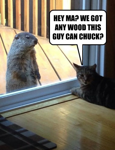 HEY MA? WE GOT ANY WOOD THIS GUY CAN CHUCK?