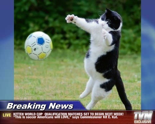 """Breaking News - KITTEH WORLD CUP  QUALIFICATION MATCHES SET TO BEGIN NEXT WEEK! """"This is soccer Americans will LOVE,"""" says Commissioner Kit E. Kat."""