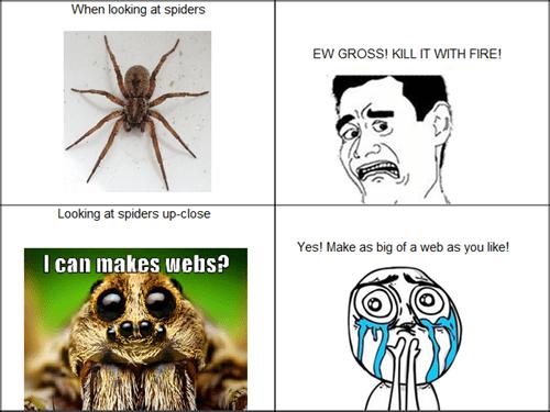 spider,close up