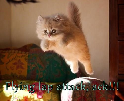 Flying lap attack, ack!!!