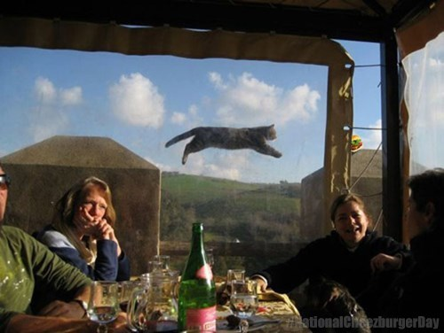 Cats,casual,flying