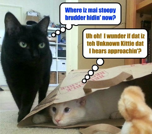 Wiff mor stories abowt teh Unknoed Kitteh in teh news, kitties eberywher habs oberactive imaginashuns..