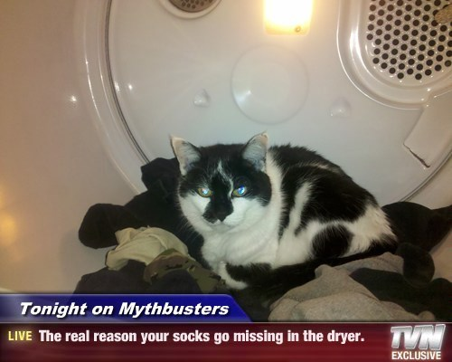 Tonight on Mythbusters - The real reason your socks go missing in the dryer.