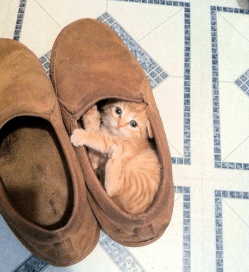 kitten in a slipper