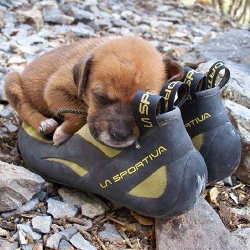 puppy asleep on a shoe