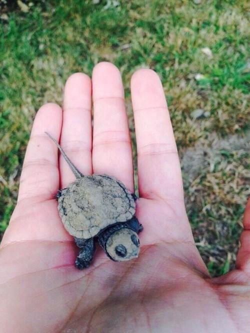 We Like Turtles Too
