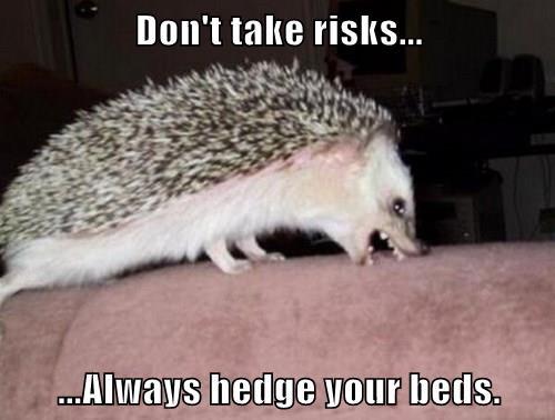 Advice Hedgehog Is A Bit Rude