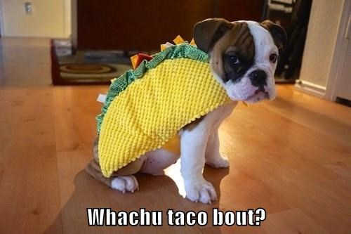Whachu taco bout?