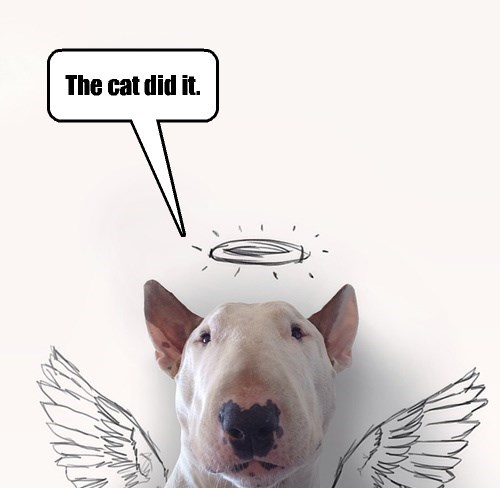 I might accept my dog's excuse, except for the fact that I don't own a cat.