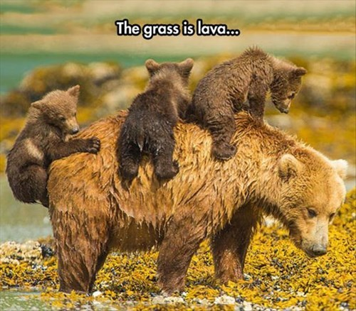 games,bears,the floor is lava