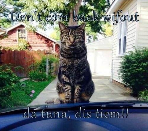 Don't com back wifout   da tuna, dis tiem!!
