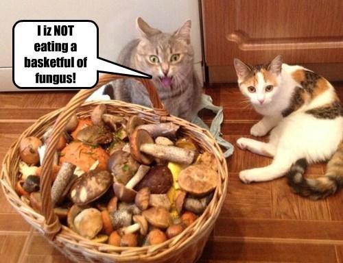 Hold the mushrooms, please