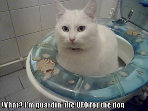 What? I'm guardin' the UFO for the dog