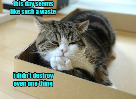 Even Cats Regret Their Laziness