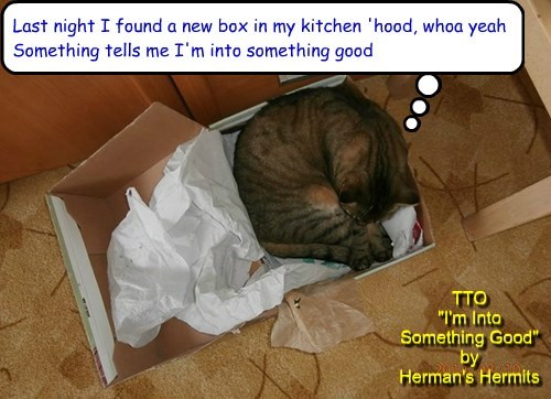 """Box Nirvana"" (TTO ""I'm Into Something Good"" by Herman's Hermits)"