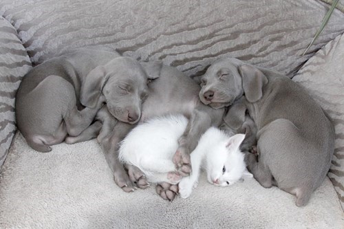 A Quadruple Cuddle Puddle!