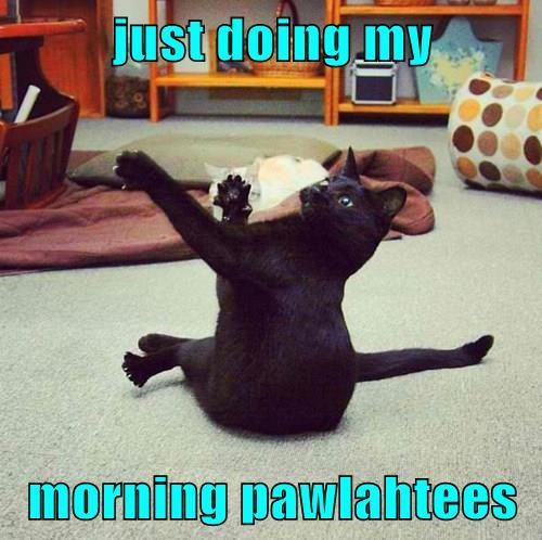 just doing my  morning pawlahtees