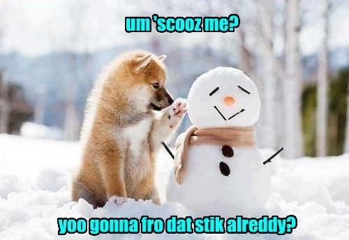 dogs,fetch,snow man